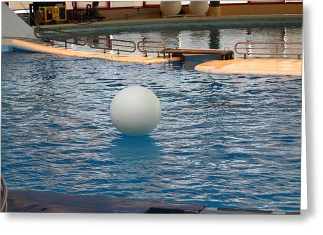 Recently Sold -  - Aquatic Greeting Cards - Dolphin Show - National Aquarium in Baltimore MD - 1212157 Greeting Card by DC Photographer