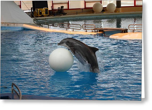 Show Greeting Cards - Dolphin Show - National Aquarium in Baltimore MD - 1212158 Greeting Card by DC Photographer