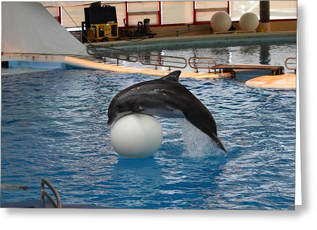 Dolphin Show - National Aquarium in Baltimore MD - 1212160 Greeting Card by DC Photographer