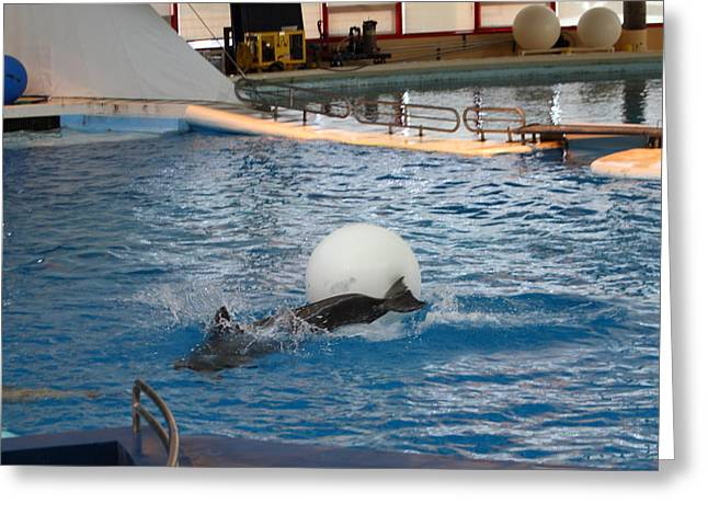 Aquatic Greeting Cards - Dolphin Show - National Aquarium in Baltimore MD - 1212164 Greeting Card by DC Photographer