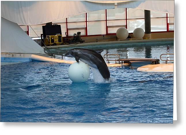 Dolphins Greeting Cards - Dolphin Show - National Aquarium in Baltimore MD - 1212169 Greeting Card by DC Photographer