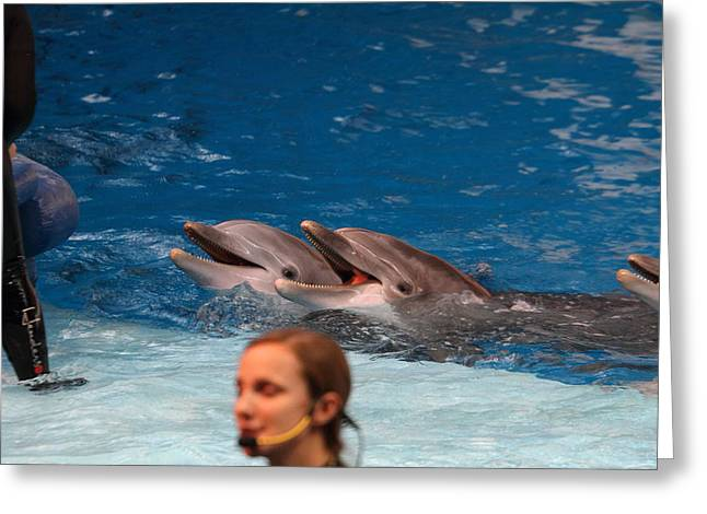 Sealife Greeting Cards - Dolphin Show - National Aquarium in Baltimore MD - 1212176 Greeting Card by DC Photographer