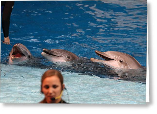 Fishes Greeting Cards - Dolphin Show - National Aquarium in Baltimore MD - 1212178 Greeting Card by DC Photographer