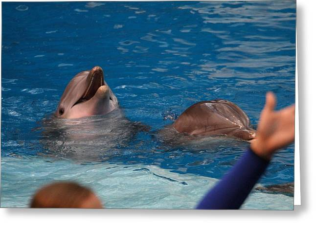 Md Greeting Cards - Dolphin Show - National Aquarium in Baltimore MD - 1212181 Greeting Card by DC Photographer