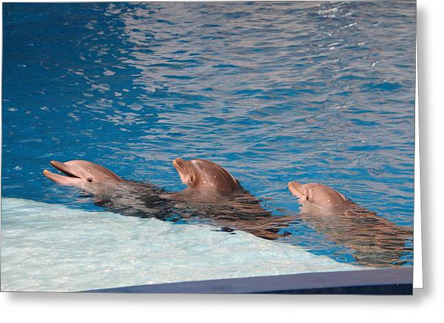 Landmark Greeting Cards - Dolphin Show - National Aquarium in Baltimore MD - 1212183 Greeting Card by DC Photographer