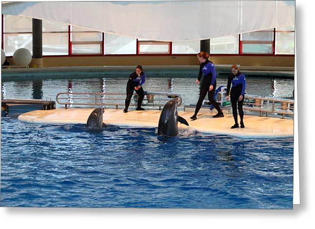 Aquatic Greeting Cards - Dolphin Show - National Aquarium in Baltimore MD - 1212188 Greeting Card by DC Photographer