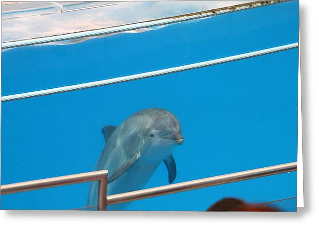 Dolphin Show - National Aquarium In Baltimore Md - 1212190 Greeting Card by DC Photographer