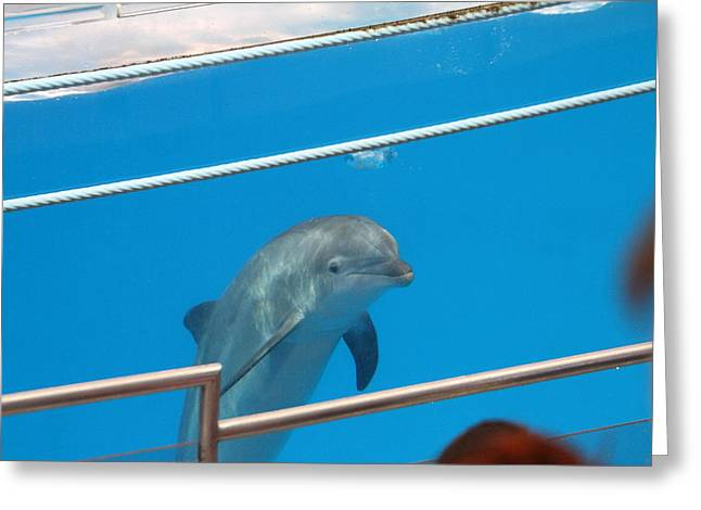 Harbor Greeting Cards - Dolphin Show - National Aquarium in Baltimore MD - 1212193 Greeting Card by DC Photographer