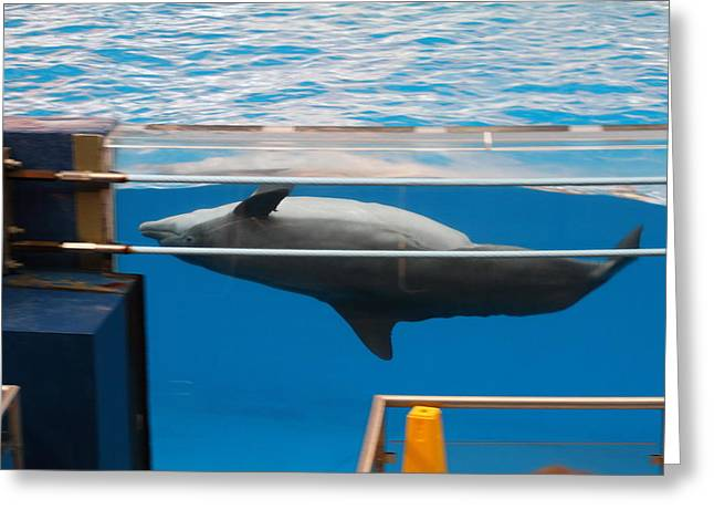 Dolphin Show - National Aquarium in Baltimore MD - 1212198 Greeting Card by DC Photographer