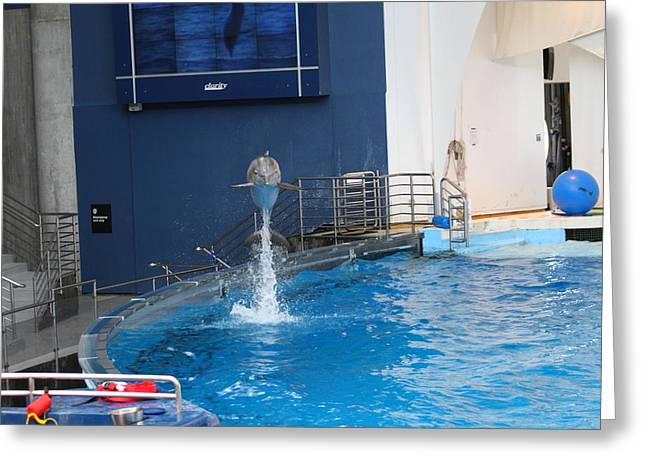 Aquatic Greeting Cards - Dolphin Show - National Aquarium in Baltimore MD - 1212199 Greeting Card by DC Photographer