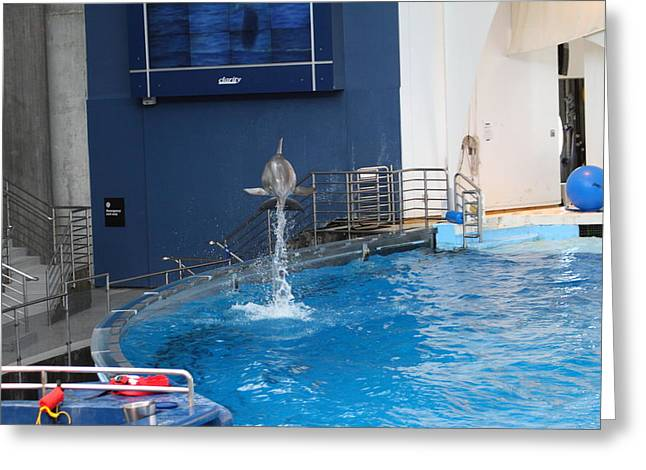 Dolphin Show - National Aquarium in Baltimore MD - 1212200 Greeting Card by DC Photographer