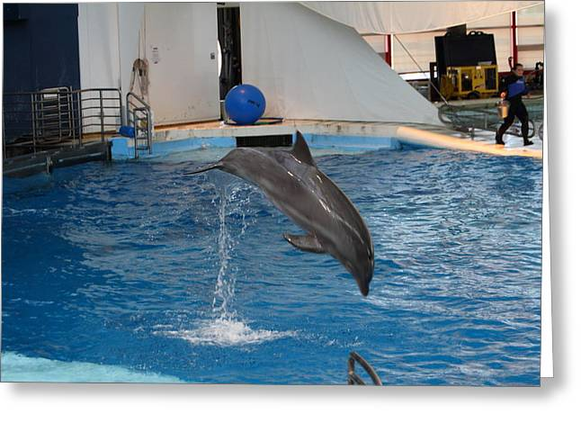 Attractions Greeting Cards - Dolphin Show - National Aquarium in Baltimore MD - 1212206 Greeting Card by DC Photographer