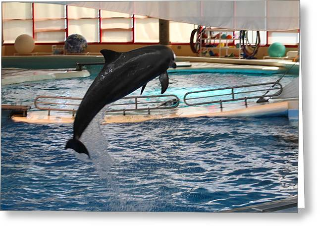 Attraction Greeting Cards - Dolphin Show - National Aquarium in Baltimore MD - 1212212 Greeting Card by DC Photographer