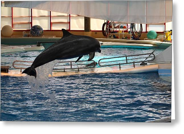 Dolphin Show - National Aquarium In Baltimore Md - 1212213 Greeting Card by DC Photographer