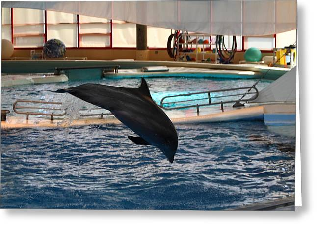 Aquatic Greeting Cards - Dolphin Show - National Aquarium in Baltimore MD - 1212215 Greeting Card by DC Photographer