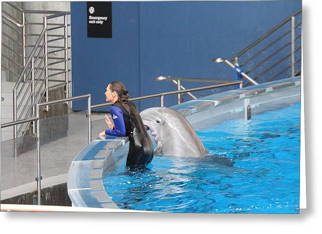 Historic Photographs Greeting Cards - Dolphin Show - National Aquarium in Baltimore MD - 1212222 Greeting Card by DC Photographer