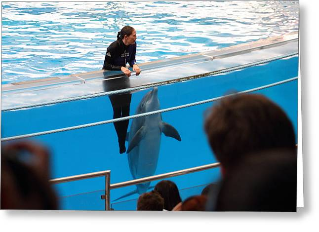 Dolphin Greeting Cards - Dolphin Show - National Aquarium in Baltimore MD - 1212227 Greeting Card by DC Photographer
