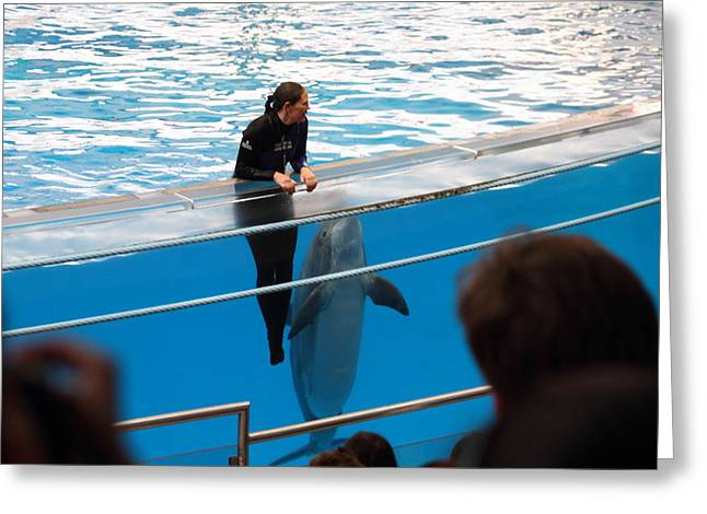 Best Sellers -  - Aquatic Greeting Cards - Dolphin Show - National Aquarium in Baltimore MD - 1212228 Greeting Card by DC Photographer