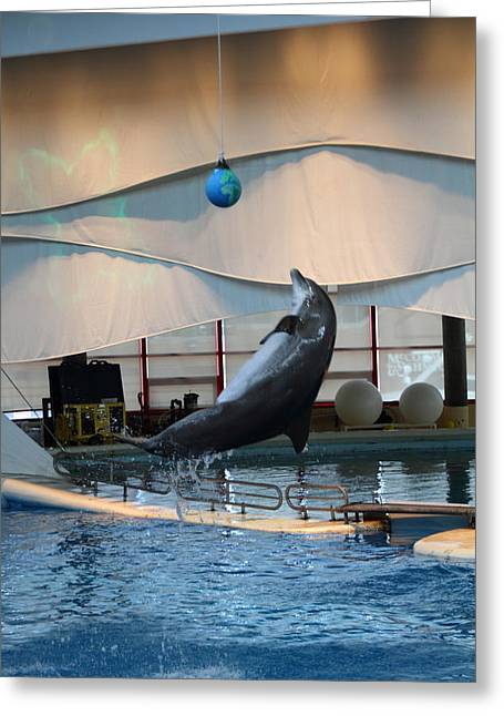 Dolphin Show - National Aquarium In Baltimore Md - 1212237 Greeting Card by DC Photographer