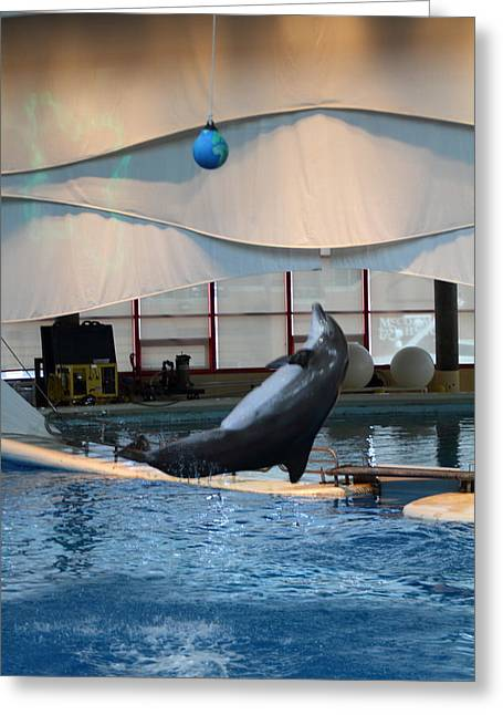 Dolphin Greeting Cards - Dolphin Show - National Aquarium in Baltimore MD - 1212238 Greeting Card by DC Photographer