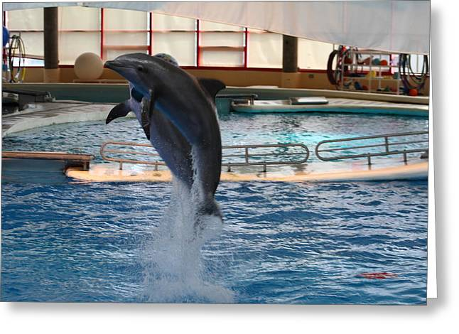 Sealife Greeting Cards - Dolphin Show - National Aquarium in Baltimore MD - 1212247 Greeting Card by DC Photographer