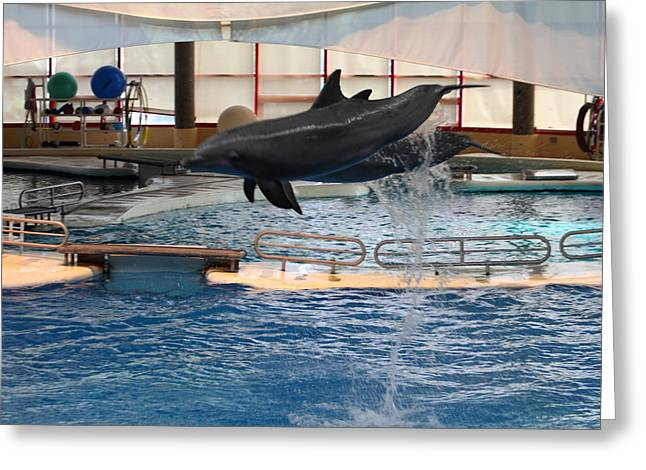 Dolphin Show - National Aquarium In Baltimore Md - 1212250 Greeting Card by DC Photographer