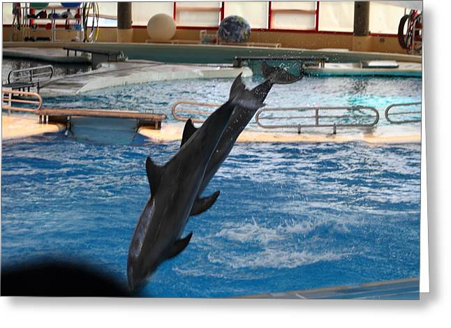 Maryland Greeting Cards - Dolphin Show - National Aquarium in Baltimore MD - 1212253 Greeting Card by DC Photographer