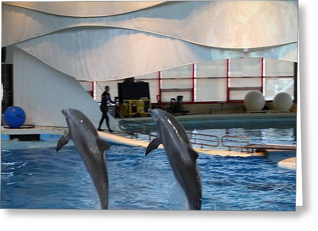 Inner Greeting Cards - Dolphin Show - National Aquarium in Baltimore MD - 1212255 Greeting Card by DC Photographer
