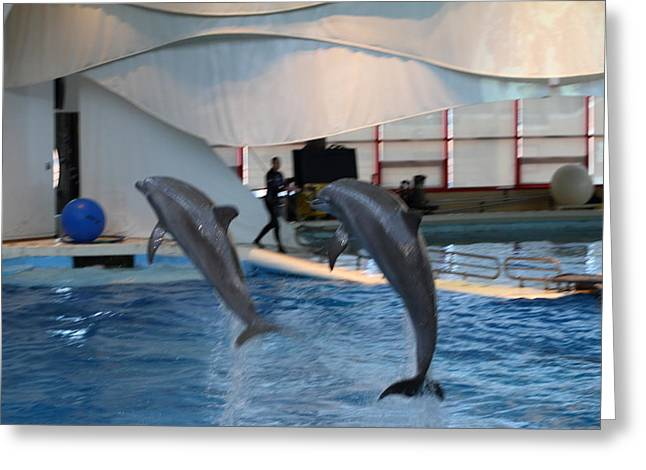 Baltimore Photographs Greeting Cards - Dolphin Show - National Aquarium in Baltimore MD - 1212256 Greeting Card by DC Photographer