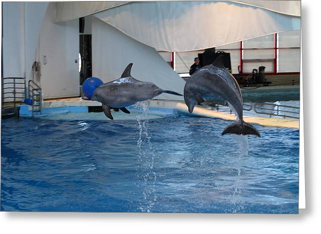 Dolphin Show - National Aquarium In Baltimore Md - 1212258 Greeting Card by DC Photographer