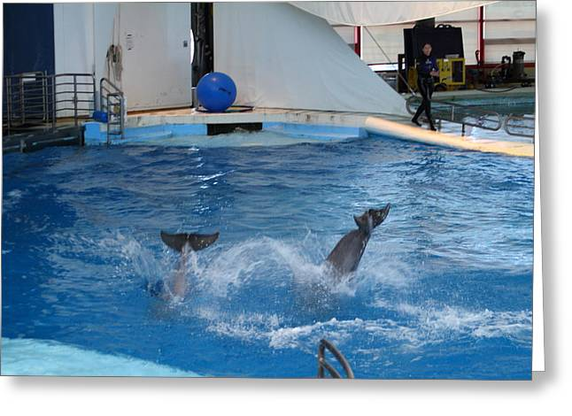 Md Photographs Greeting Cards - Dolphin Show - National Aquarium in Baltimore MD - 1212262 Greeting Card by DC Photographer