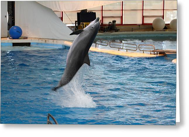 Dolphin Show - National Aquarium In Baltimore Md - 1212263 Greeting Card by DC Photographer