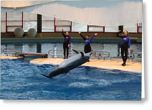Maryland Greeting Cards - Dolphin Show - National Aquarium in Baltimore MD - 1212277 Greeting Card by DC Photographer