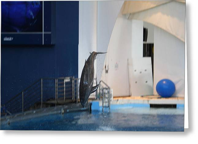 Aquatic Greeting Cards - Dolphin Show - National Aquarium in Baltimore MD - 121228 Greeting Card by DC Photographer