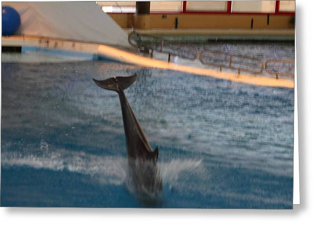 Attraction Greeting Cards - Dolphin Show - National Aquarium in Baltimore MD - 121230 Greeting Card by DC Photographer