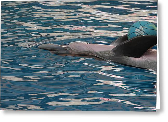 Recently Sold -  - Aquatic Greeting Cards - Dolphin Show - National Aquarium in Baltimore MD - 121235 Greeting Card by DC Photographer