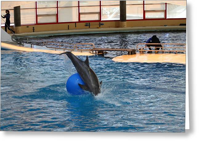 Sealife Greeting Cards - Dolphin Show - National Aquarium in Baltimore MD - 121238 Greeting Card by DC Photographer