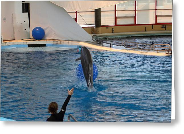 Dolphin Show - National Aquarium in Baltimore MD - 121239 Greeting Card by DC Photographer