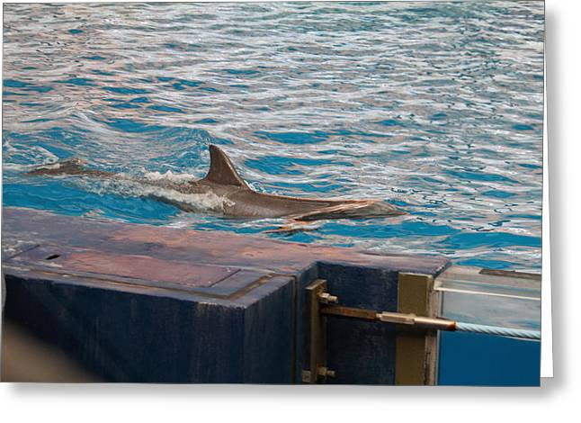Sealife Greeting Cards - Dolphin Show - National Aquarium in Baltimore MD - 121245 Greeting Card by DC Photographer