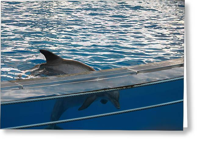 Dolphin Greeting Cards - Dolphin Show - National Aquarium in Baltimore MD - 121248 Greeting Card by DC Photographer