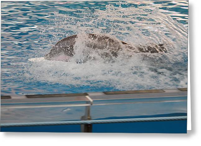 Show Greeting Cards - Dolphin Show - National Aquarium in Baltimore MD - 121249 Greeting Card by DC Photographer