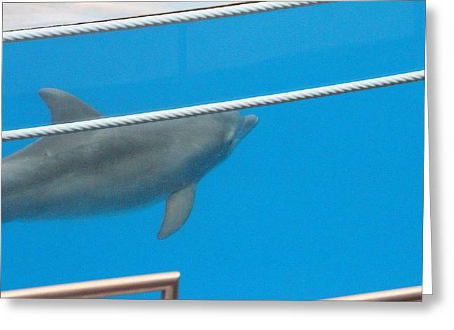 Dolphin Show - National Aquarium In Baltimore Md - 12125 Greeting Card by DC Photographer