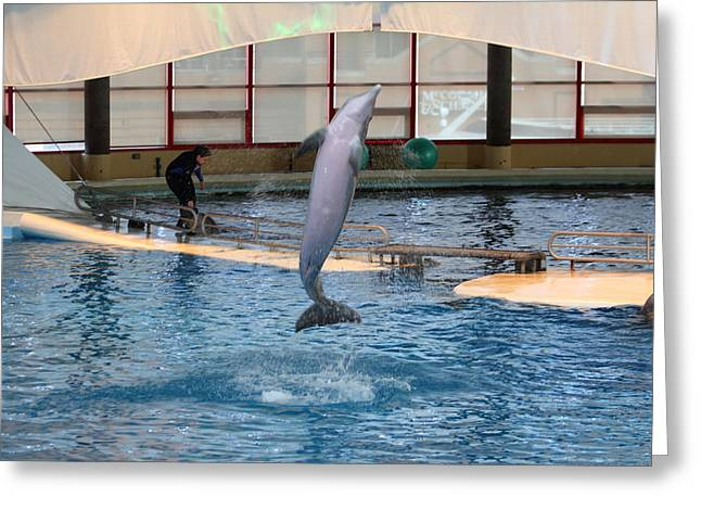 Attractions Greeting Cards - Dolphin Show - National Aquarium in Baltimore MD - 121264 Greeting Card by DC Photographer
