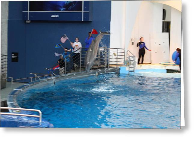 Md Greeting Cards - Dolphin Show - National Aquarium in Baltimore MD - 121274 Greeting Card by DC Photographer