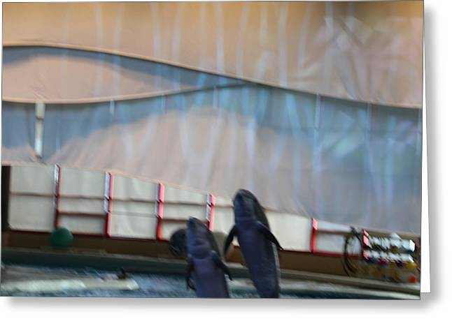 Sealife Greeting Cards - Dolphin Show - National Aquarium in Baltimore MD - 121275 Greeting Card by DC Photographer