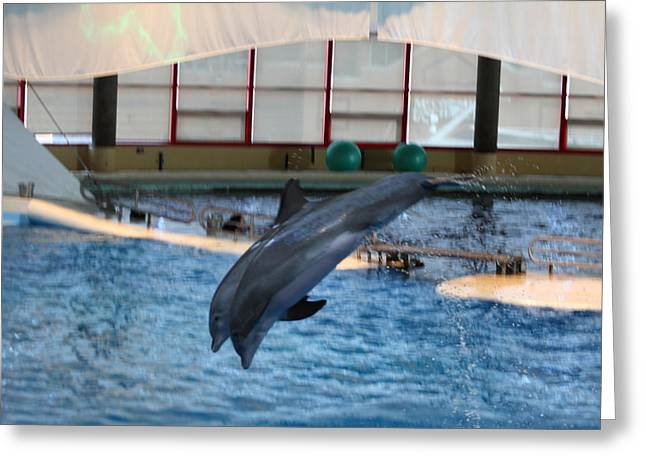 National Greeting Cards - Dolphin Show - National Aquarium in Baltimore MD - 121285 Greeting Card by DC Photographer