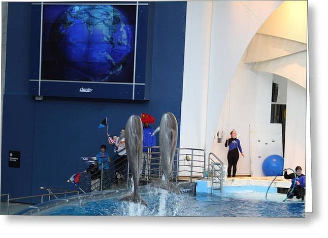 Aquatic Greeting Cards - Dolphin Show - National Aquarium in Baltimore MD - 121286 Greeting Card by DC Photographer