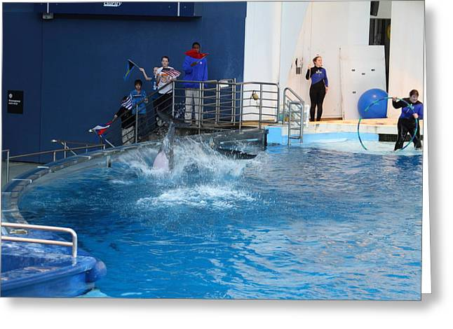 Dolphin Greeting Cards - Dolphin Show - National Aquarium in Baltimore MD - 121292 Greeting Card by DC Photographer