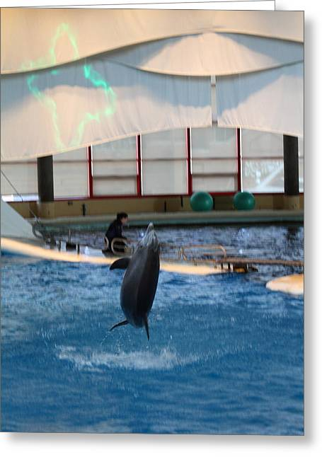 Tourist Greeting Cards - Dolphin Show - National Aquarium in Baltimore MD - 121296 Greeting Card by DC Photographer