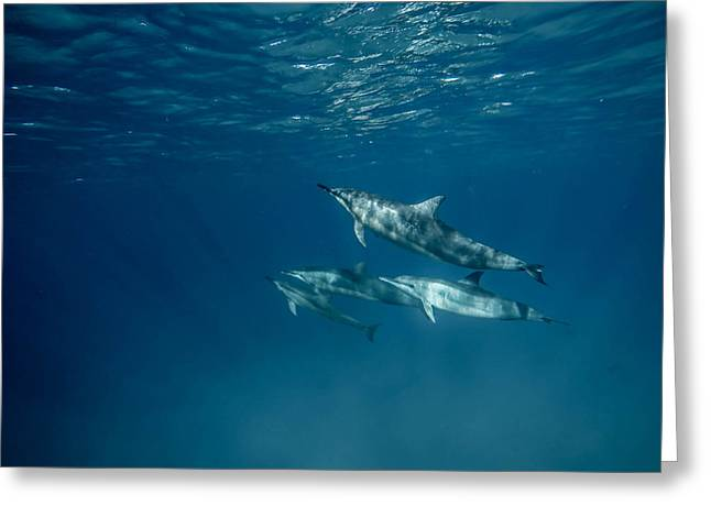 Go Pro Greeting Cards - Dolphin tale Greeting Card by Matt Baker